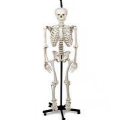 Esqueleto Humano Colgante...